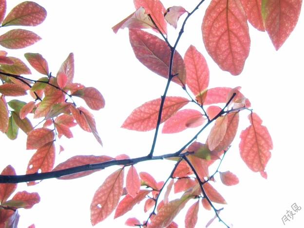 Photos: 小さい秋1