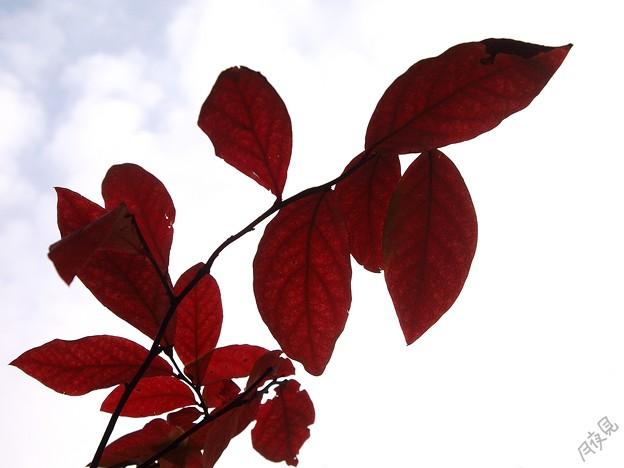 小さい秋3