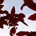 Photos: 小さい秋2