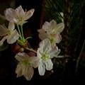 Photos: 花飾り