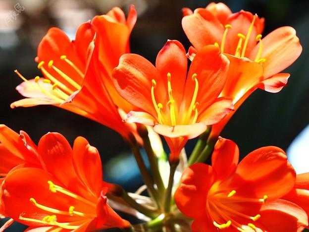 鮮やかなオレンジ