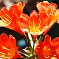 Photos: 鮮やかなオレンジ