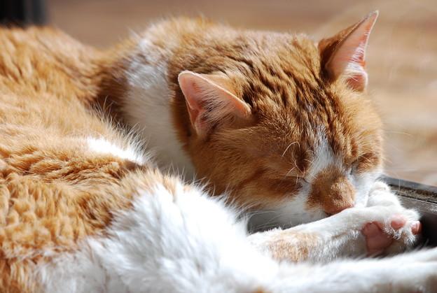 Photos: Spoil the Cat 3-27-12