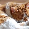 写真: Spoil the Cat 3-27-12