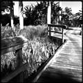 Photos: The Boardwalk 6-25-17