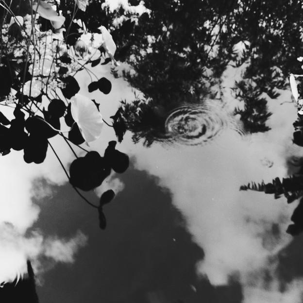 写真: The Lotus Pond 7-30-17