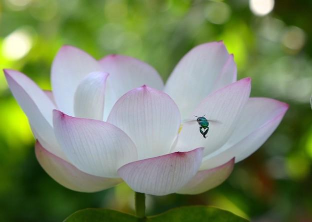 写真: A Cuckoo Wasp 8-6-17