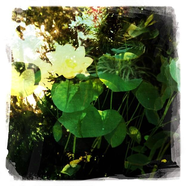 写真: Lotus VII 8-6-17