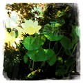 Lotus VII 8-6-17