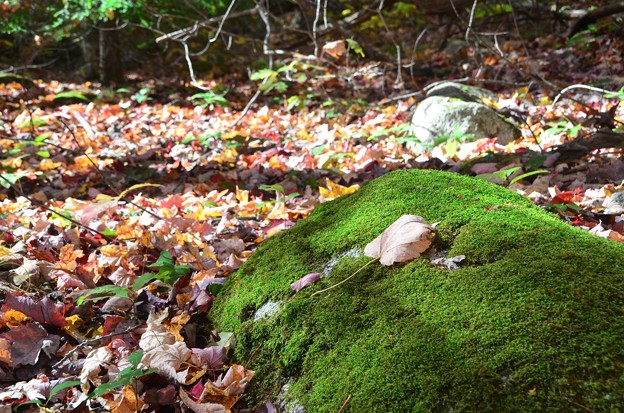 A Leaf on the Rock 10-20-17