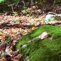 写真: A Leaf on the Rock 10-20-17