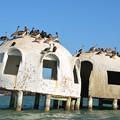 写真: Pelicans 2-24-18