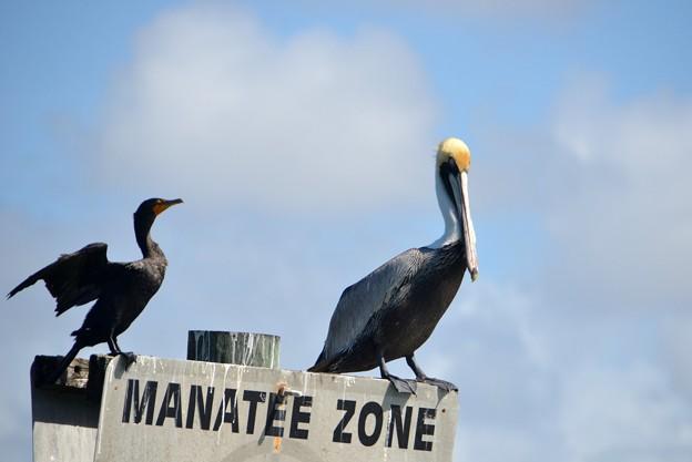 Manatee Zone 2-11-18