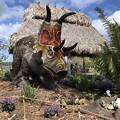 Photos: Diabloceratops and Babies 2-25-18