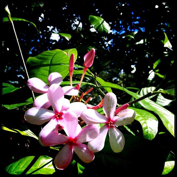 写真: Srub Vinca 7_iPhone4_Hipstamatc280_Ruddy Lens_Love 81 Film
