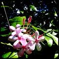 Srub Vinca 7_iPhone4_Hipstamatc280_Ruddy Lens_Love 81 Film