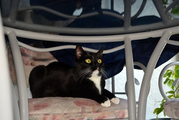 居座る猫。