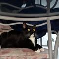 写真: 居座る猫。