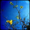 写真: iPhone 4_Jamaica HipstaPak_Hipstamatic280