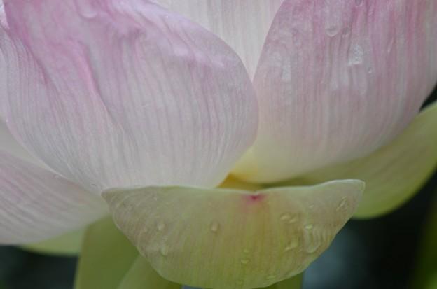 写真: Lotus I 5-16-18