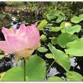 写真: Lotus V 5-16-18