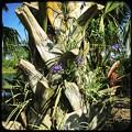 写真: Palm and Spiderworts 4-8-18