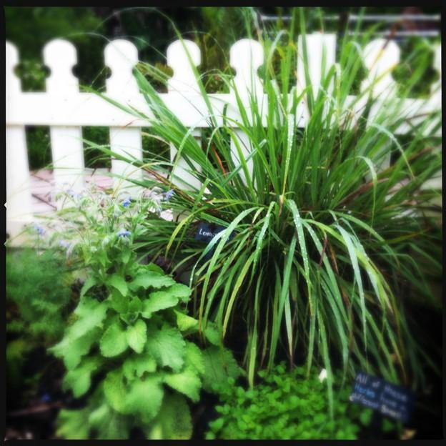 写真: Herb Garden 5-16-18
