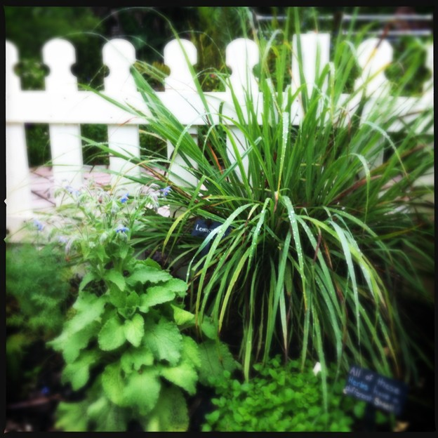 Herb Garden 5-16-18