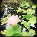 Lotus III 5-16-18