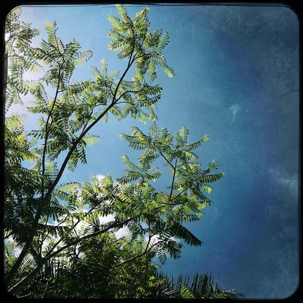 Jacanranda and the Sky 6-3-18