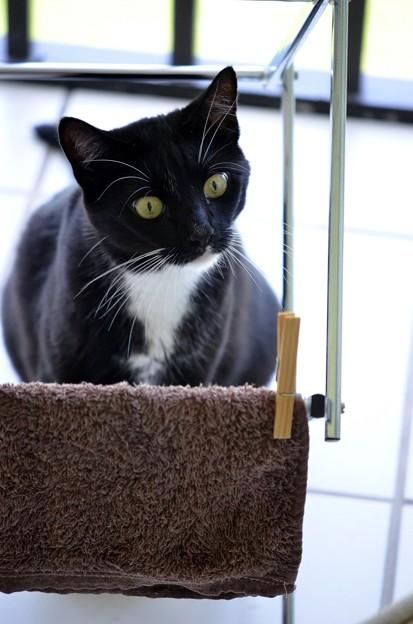 (モノコンスピンオフ)洗濯物を干す猫