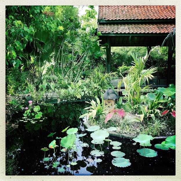 Lotus Pond 6-17-18