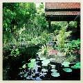 写真: Lotus Pond 6-17-18