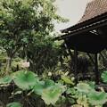 Lotus Pond II 7-1-18
