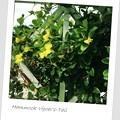 Hammock Viper's-Tail 6-17-18