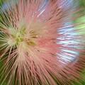 Pink Powder Puff II 7-1-18