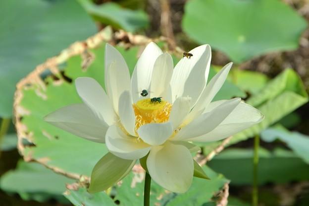写真: They Just Love This Lotus 7-1-18