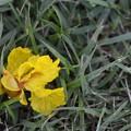 Yellow-Flamboyant 7-1-18