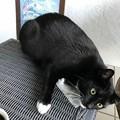 写真: ヘイゼルナットコーヒーで陶酔する猫