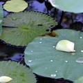 写真: Petals 9-1-18