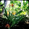 Bird of Paradise III 9-1-18