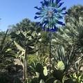 Blue Calla Flare 11-10-18