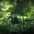 ジャングルの艶