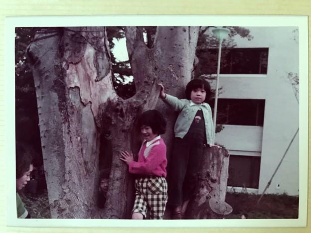 すんごい木だった。