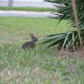 Photos: Eastern Cottontail2 3-18-19