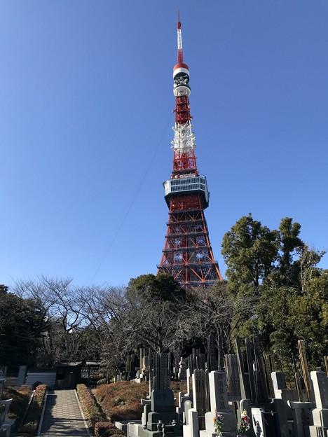 お墓とタワー 2019-1-24