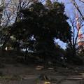 Photos: 古墳とタワー 2019-1-24
