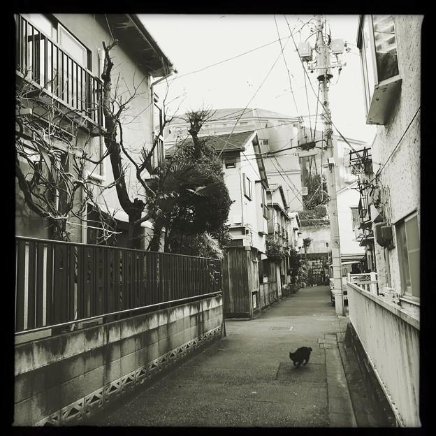 小山町猫 2019-1-24