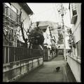 Photos: 小山町猫 2019-1-24