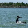 Photos: Dolphin Tale (Tail) 4-27-19